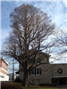 Bald Cypress (Taxodium Distichum) at Mountaineer Hertiage Park Dering's Funeral Home