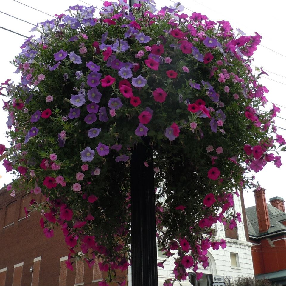 Flower Basket 2012